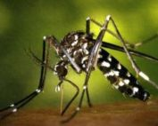 Health Department Warning against EEE from Mosquitos!!